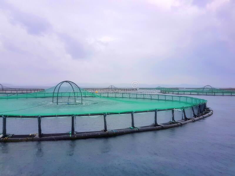 Cromaris Marine Fish Farm, Croatia stock image