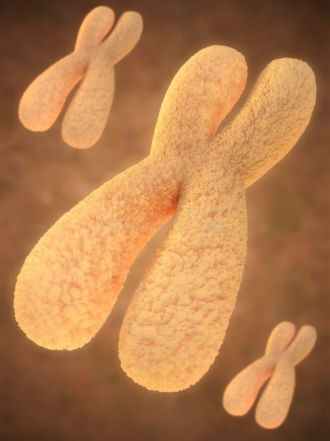 Cromosoma illustrazione vettoriale