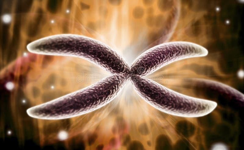 Cromosoma fotografie stock libere da diritti