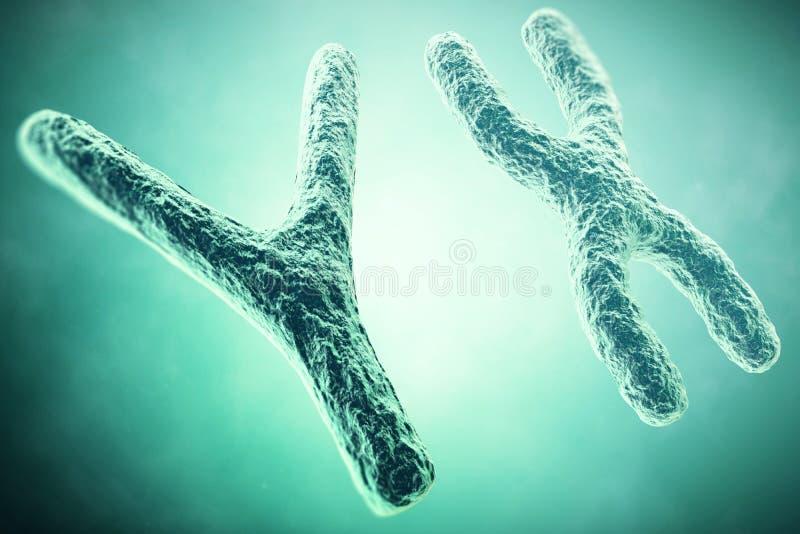 Cromosoma de YX en el primero plano, un concepto científico ilustración 3D fotografía de archivo libre de regalías
