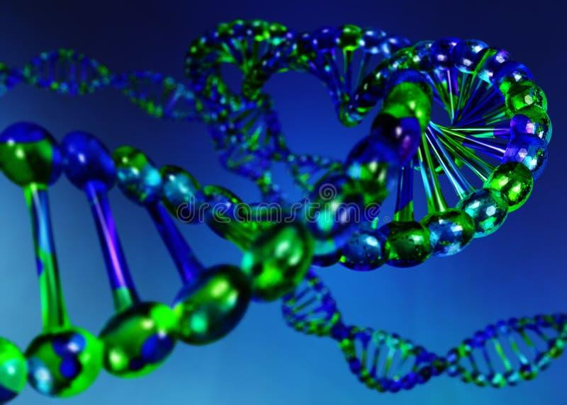 cromosoma DNA illustrazione vettoriale