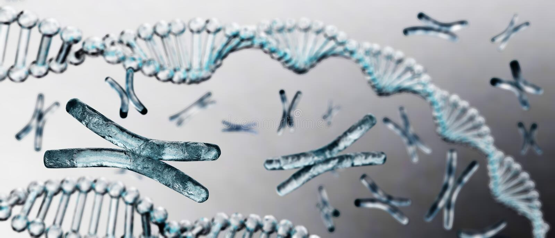 Cromosoma, DNA immagine stock