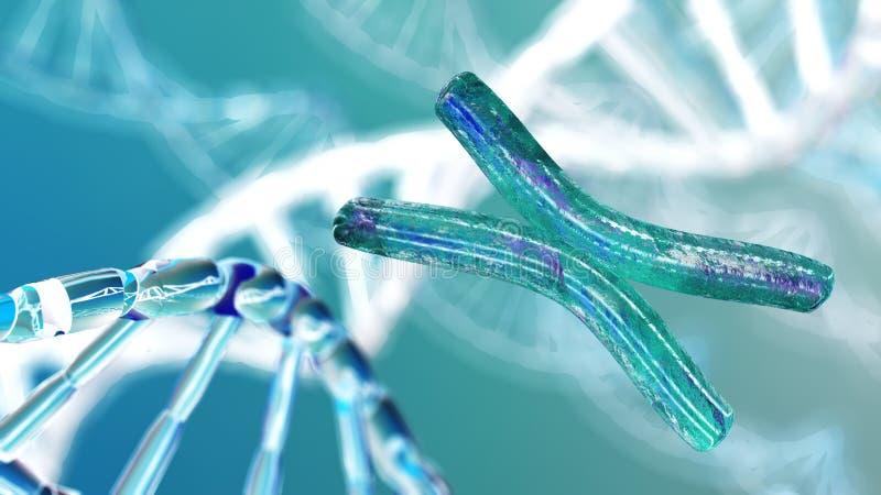 Cromosoma, DNA immagini stock