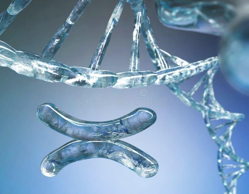 Cromosoma, DNA fotografie stock