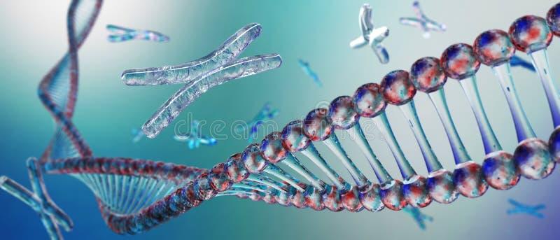 Cromosoma, DNA fotografie stock libere da diritti