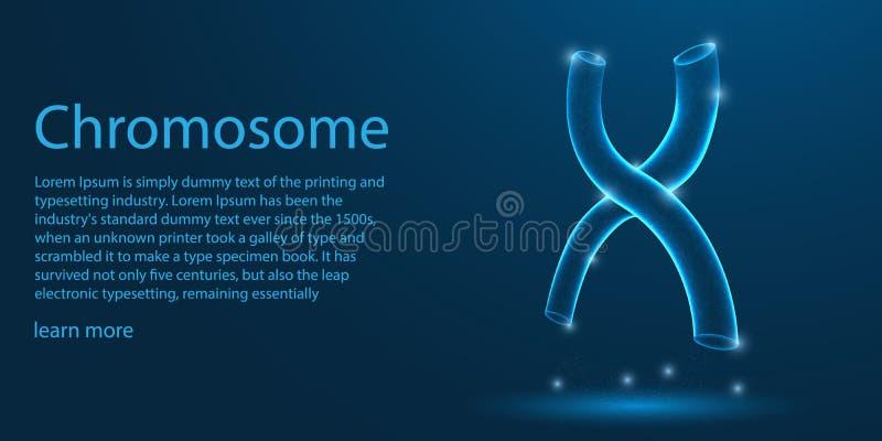 Cromosoma humano estructura X-formada concepto polivinílico bajo del tema del wireframe en fondo azul vector del ejemplo libre illustration