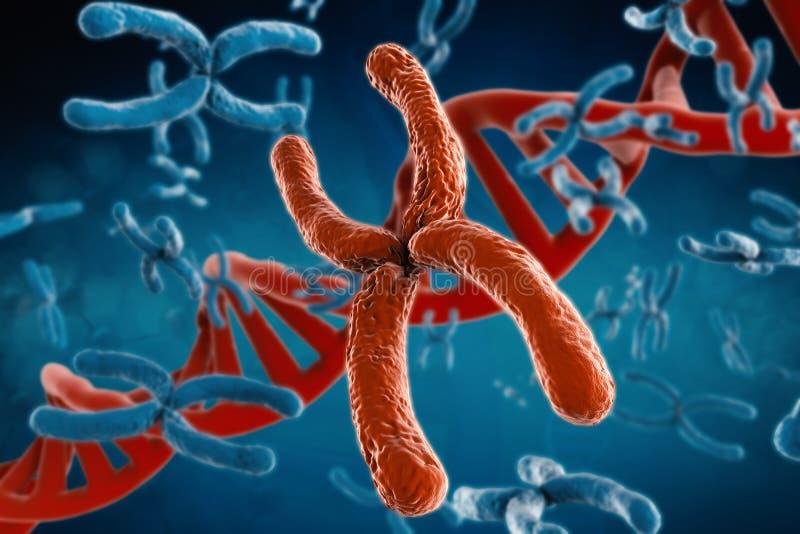 Cromosoma rosso fotografia stock libera da diritti