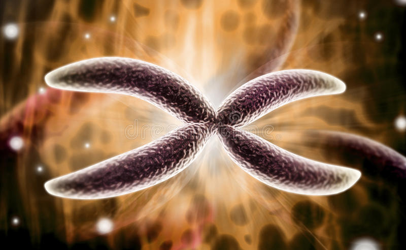 Cromossoma fotos de stock royalty free