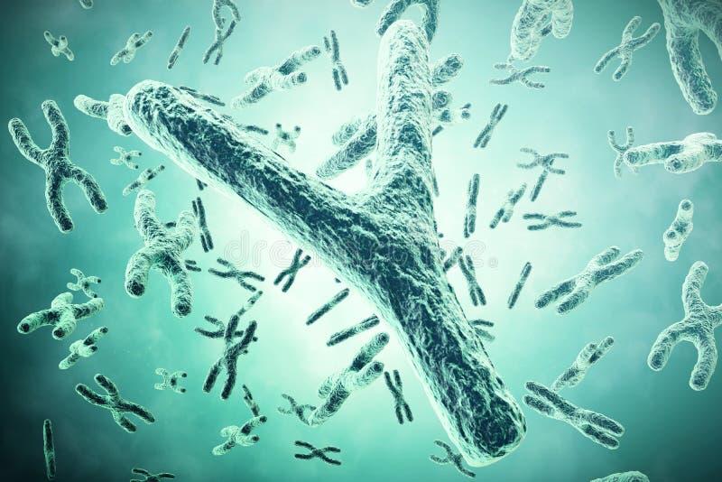 Cromossoma de Y no primeiro plano, um conceito científico ilustração 3D foto de stock royalty free