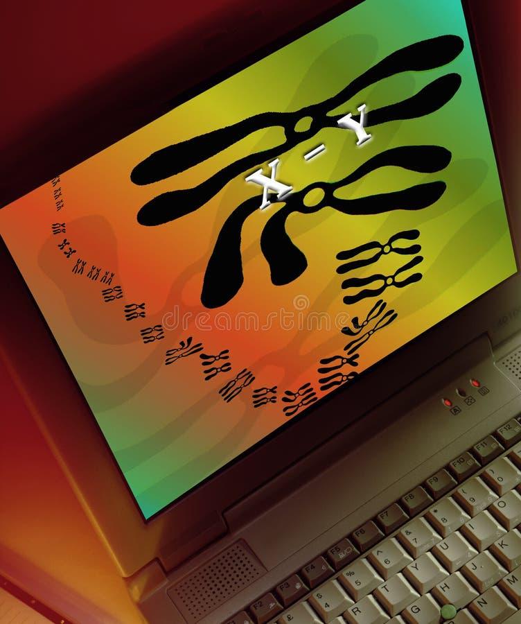 Cromossomas em um tela de computador fotografia de stock royalty free