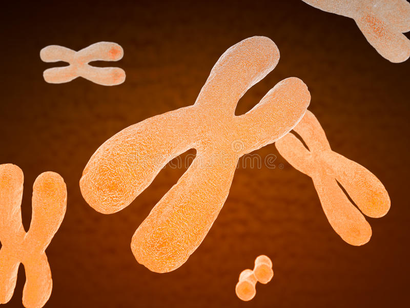 Cromossomas humanos emparelhados ilustração do vetor