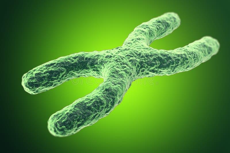 Cromossomo x no fundo verde com profundidade do efeito de campo, conceito científico ilustração 3D ilustração royalty free