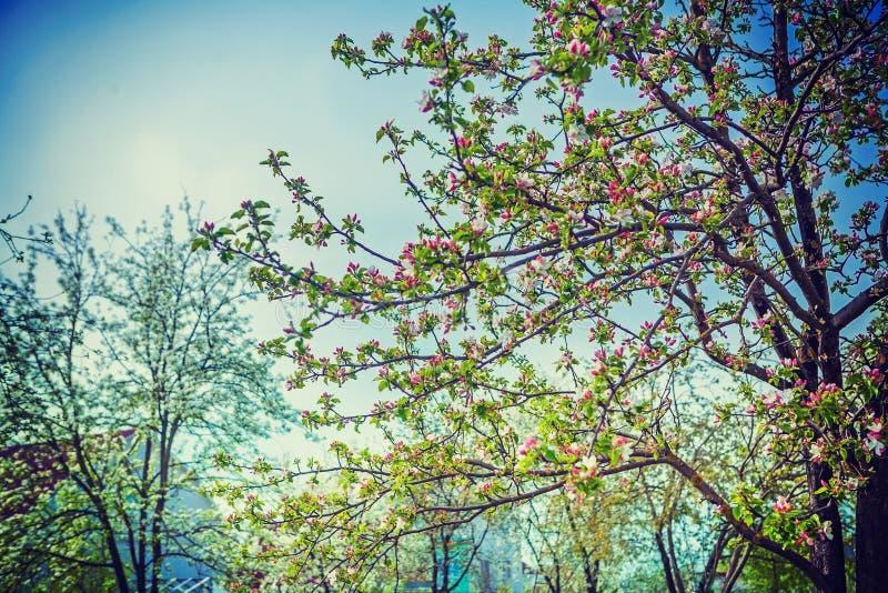 Crones kwitnąć drzewa instagram przełaz obrazy stock