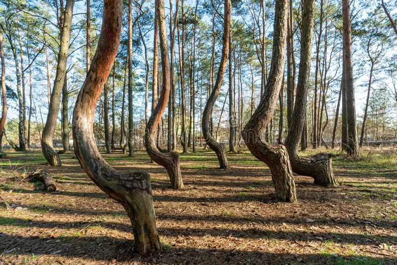 3 307 Crooked Forest Photos Free Royalty Free Stock Photos From Dreamstime,Funny Animal Pictures With Captions Clean