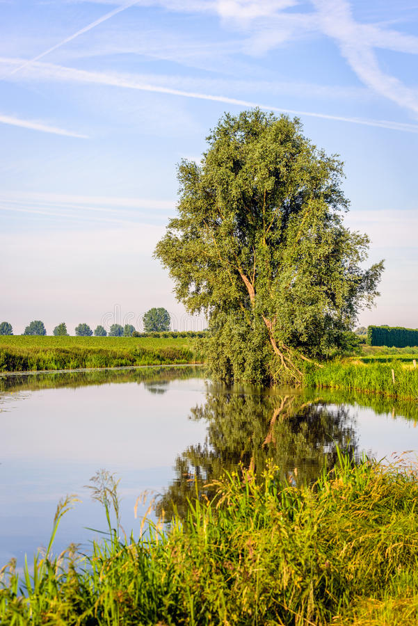 Crooked tree reflected in the smooth water surface. Crooked willow tree reflected in the mirror smooth water surface of a small stream on a windless day in the stock image
