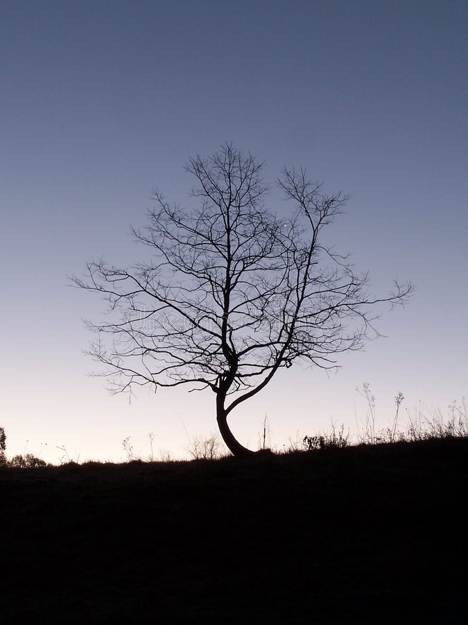 Download CrookedTree stock image. Image of outdoor, dusk, silhouette - 172219