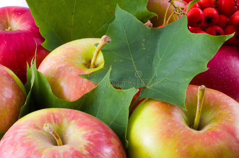 Crop of apples royalty free stock image