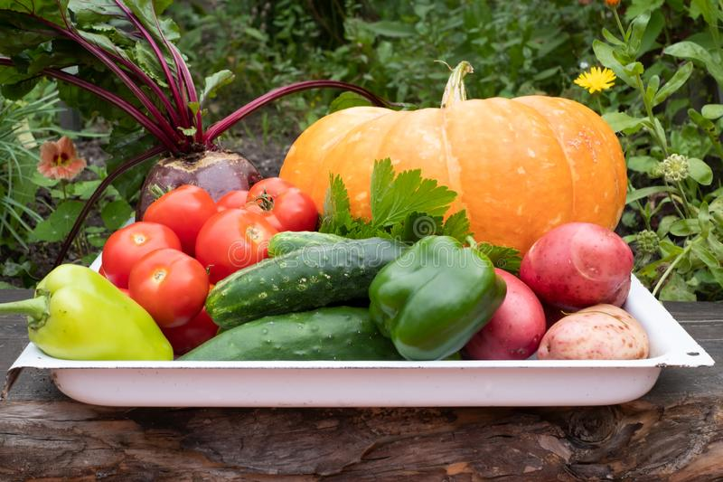 Crop of autumn vegetables. Cucumber, potato, tomato, pumpkin, pepper. royalty free stock photo
