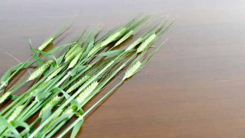 Crop barley on wooden background stock images