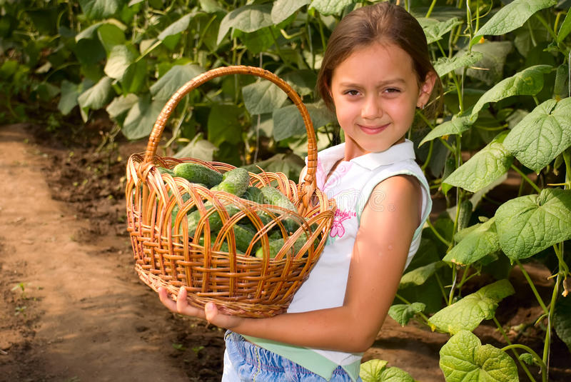 Crop of cucumbers stock photography