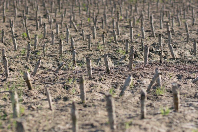 Crop devastation after flooding