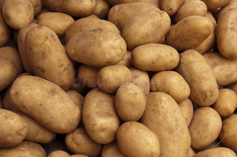 Crop of Farm Potatoes stock photos