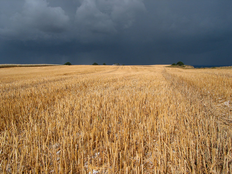 Crop field royalty free stock images