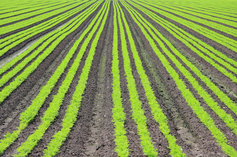 Crop field stock images