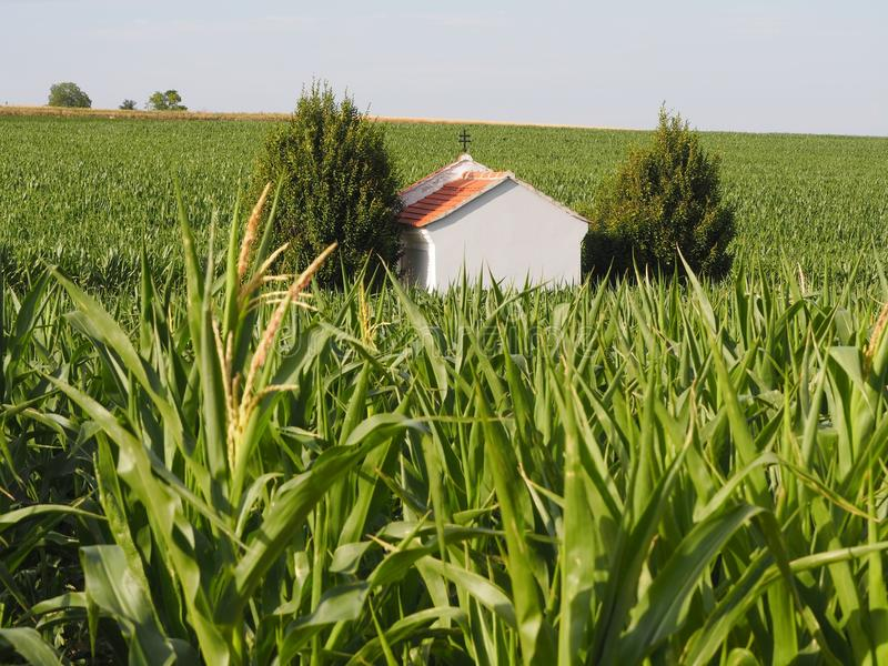 Crop, Field, Agriculture, Grass Family Free Public Domain Cc0 Image