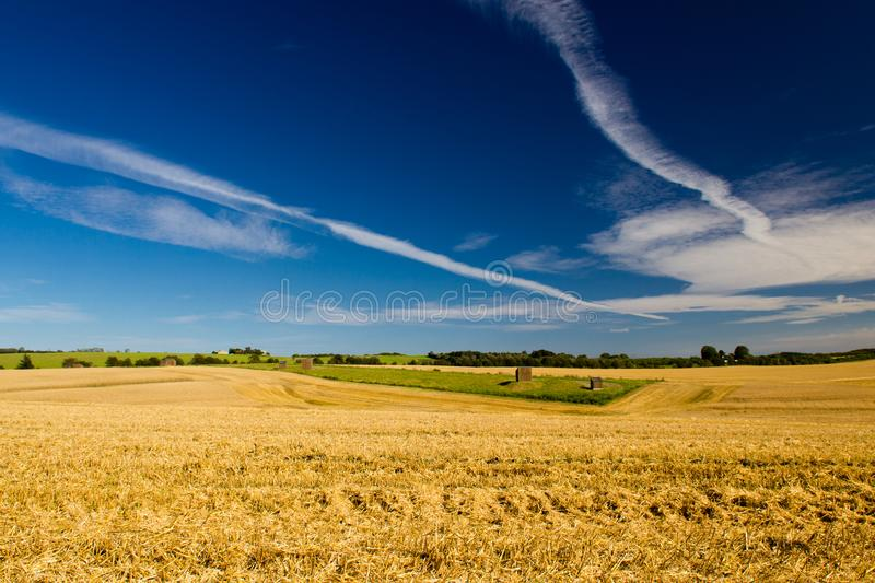 A crop field in Denmark royalty free stock images