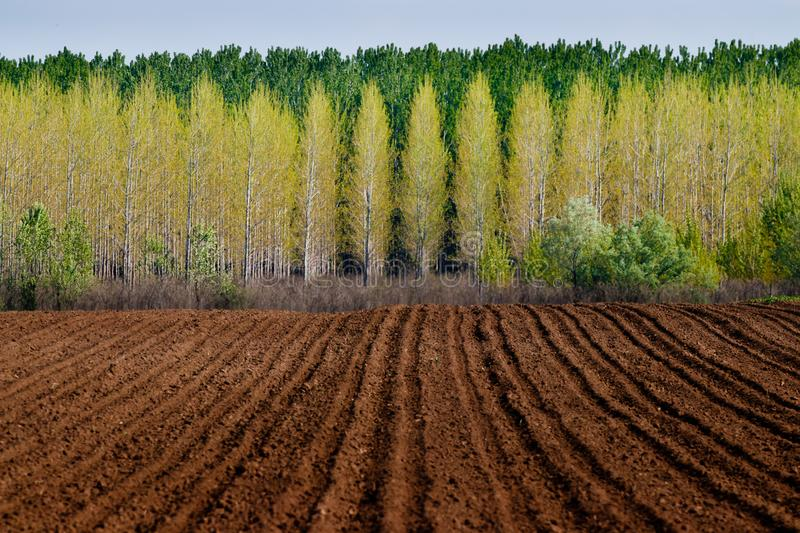 Crop field at early spring stock photo