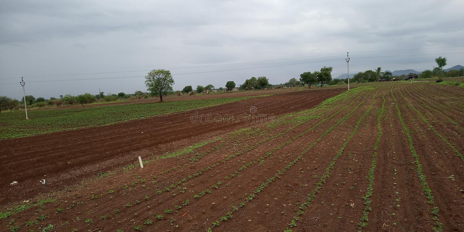Crop field in India stock photo