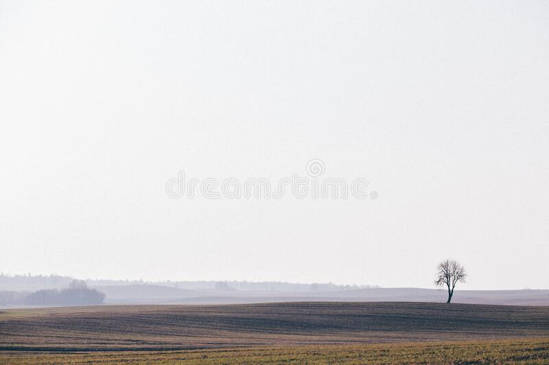 Crop field landscape royalty free stock photos