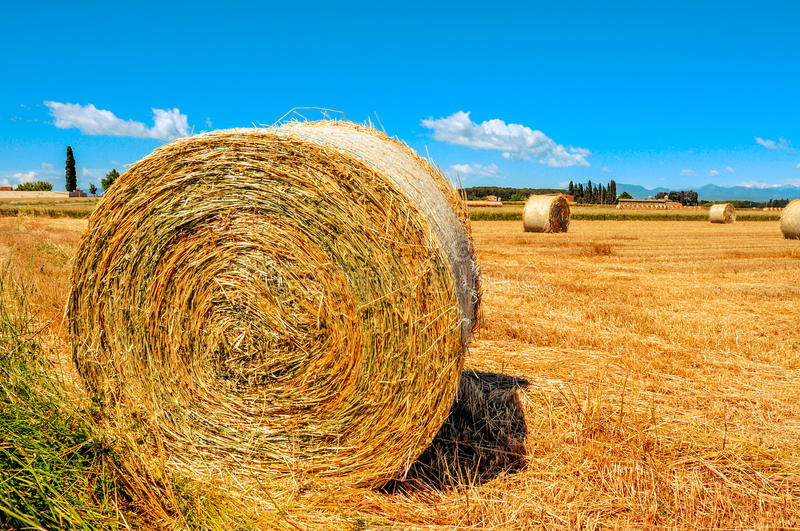 Crop field in Spain with round straw bales after harvesting stock photography