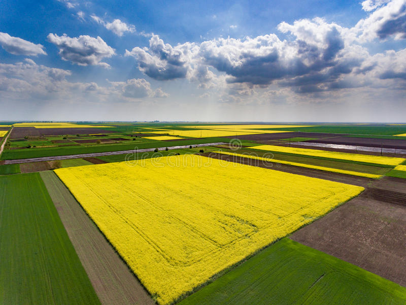 Crop fields with soybean. Aerial view royalty free stock images