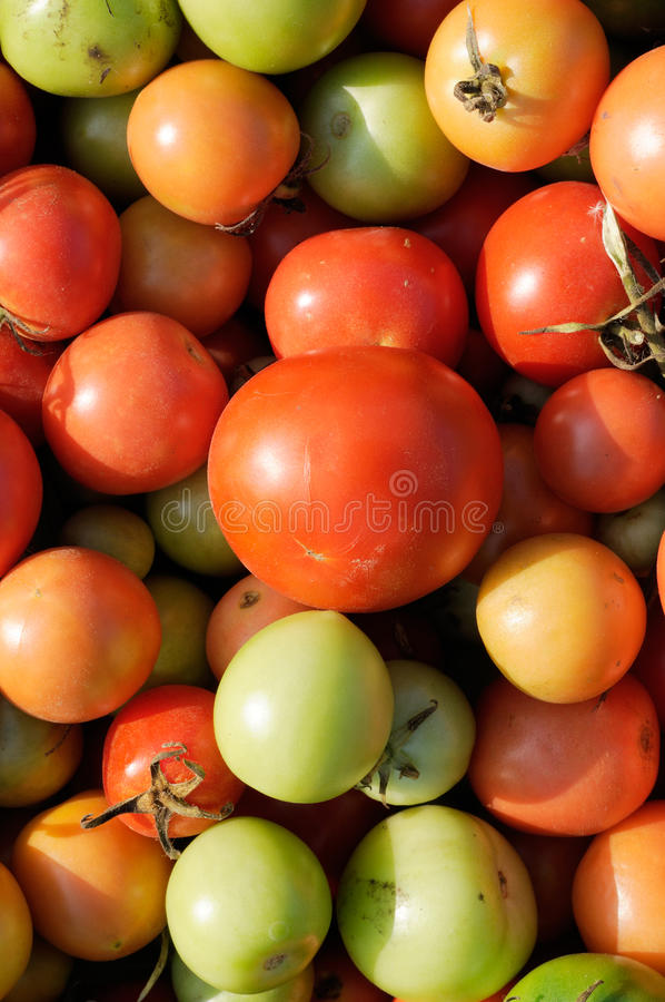 Crop of Green and Red Tomatoes royalty free stock images
