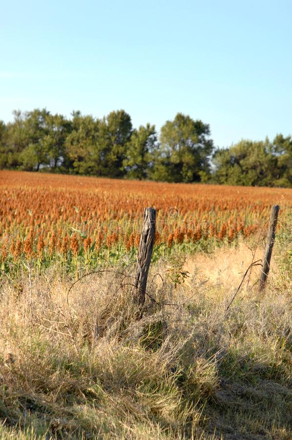 Download Crop Growing In Central Kanses Stock Photo - Image: 4227282