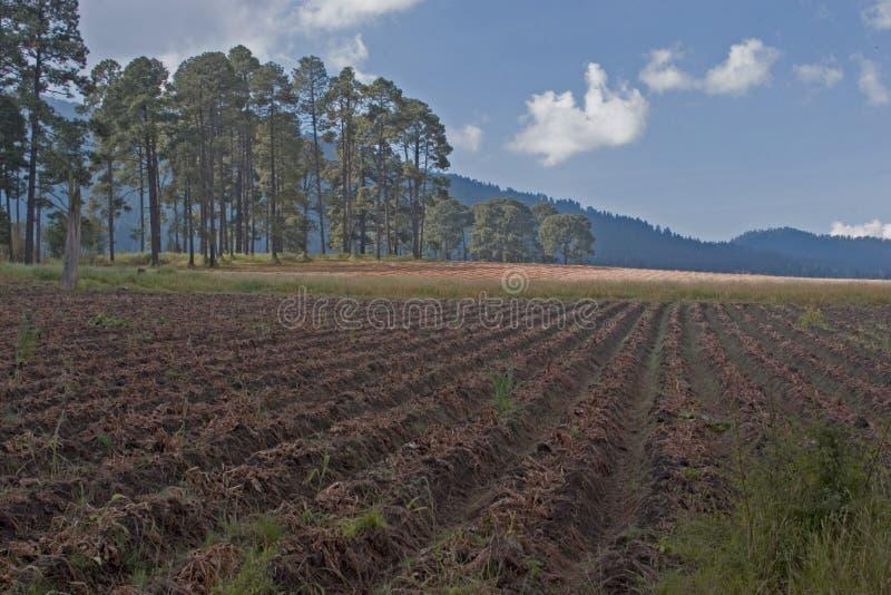 Crop Land stock photography