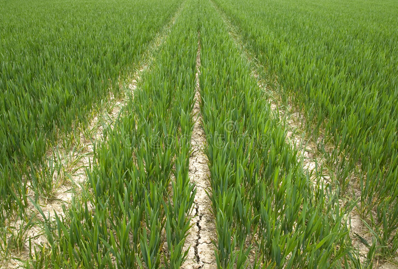 Crop Tracks royalty free stock photo