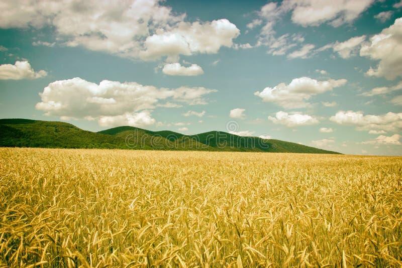 Cropfield stockfotografie