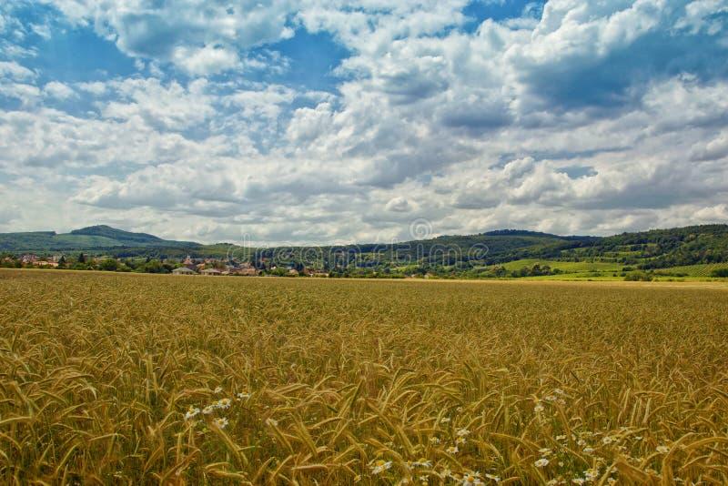 Cropfield med det Forested berget royaltyfria bilder