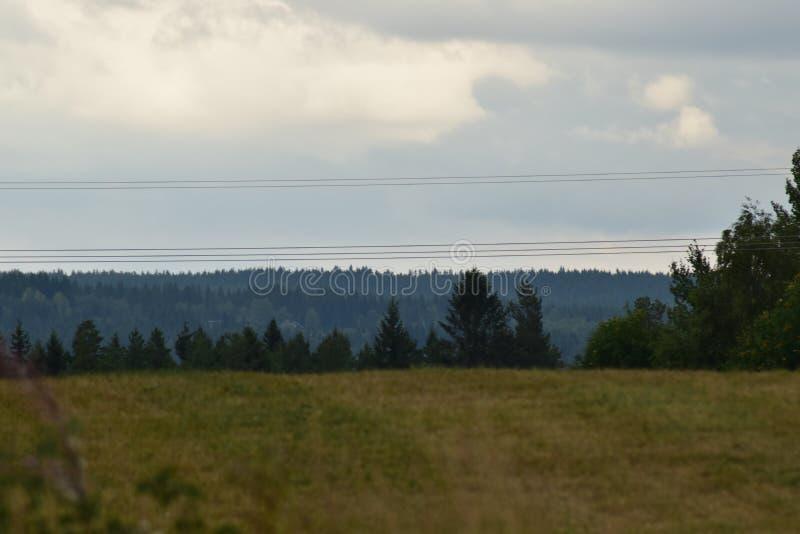 Cropfield met bomen op de achtergrond stock foto's
