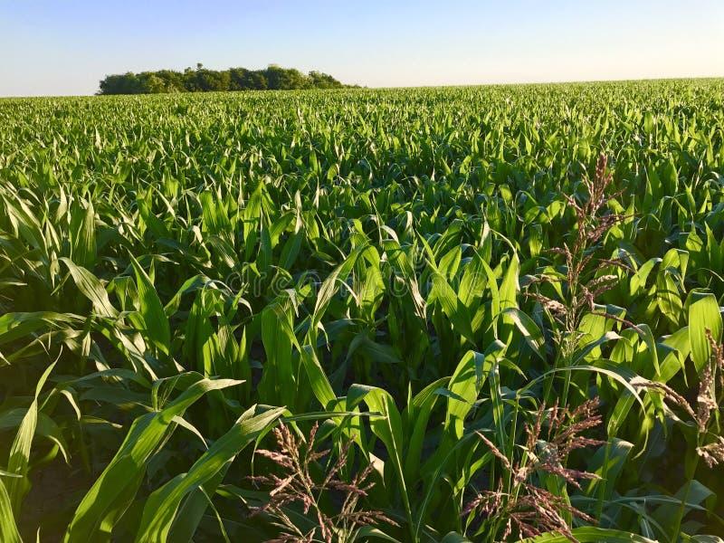 Cropland σε Ennis Τέξας στοκ εικόνα