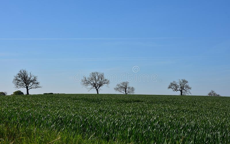Cropland, τομείς και καλλιεργήσιμο έδαφος με τους μπλε ουρανούς στην Αγγλία στοκ εικόνες