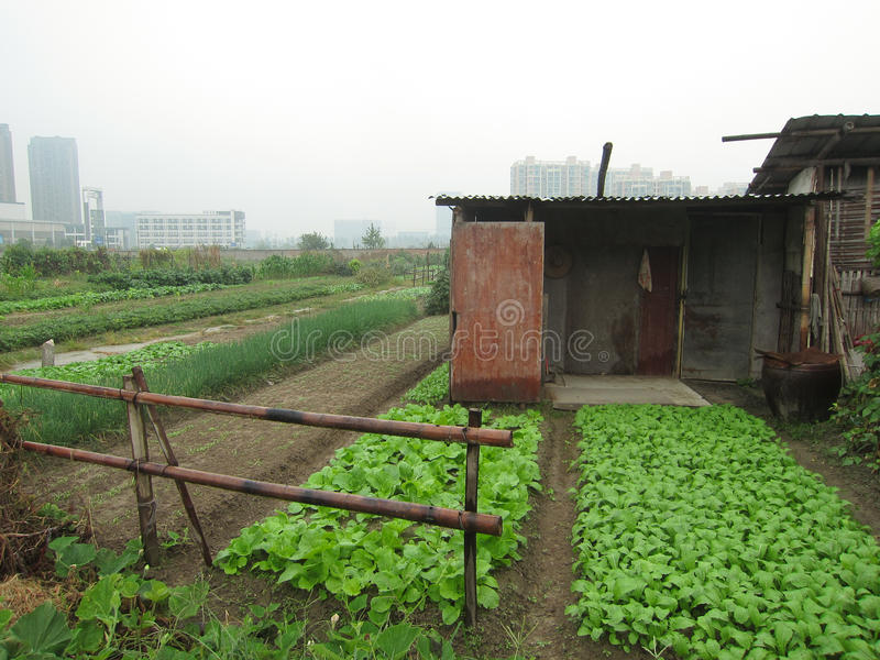 Cropland в городе стоковое изображение