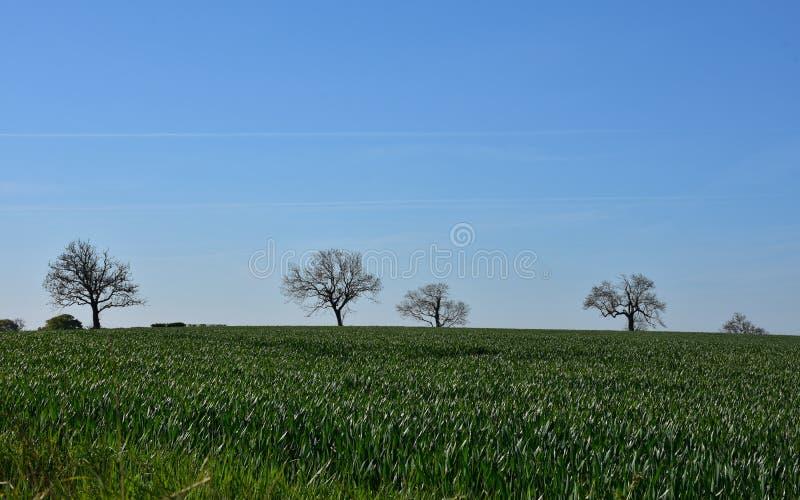 Cropland, поля и сельскохозяйственные угодья с голубыми небесами в Англии стоковые изображения