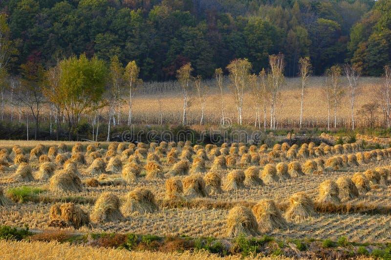 cropland стоковое изображение