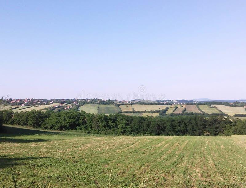 cropland стоковое изображение rf