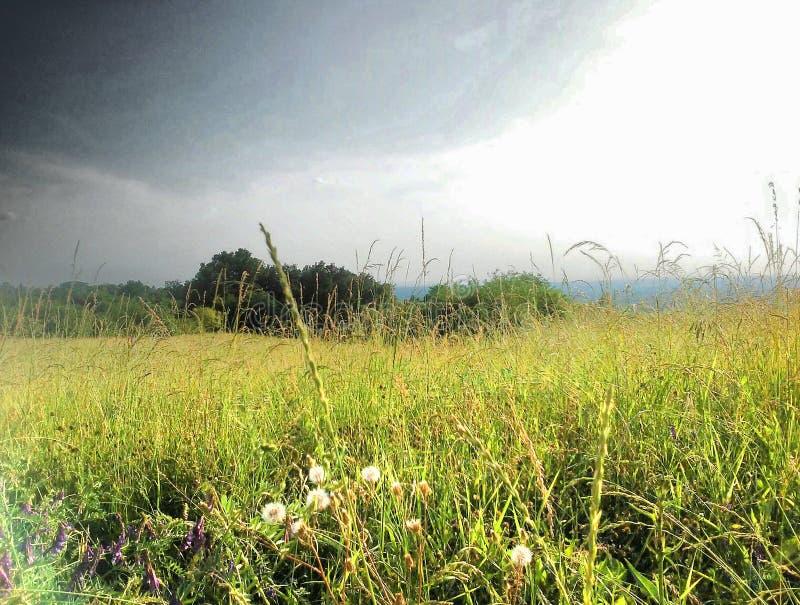 cropland стоковая фотография rf