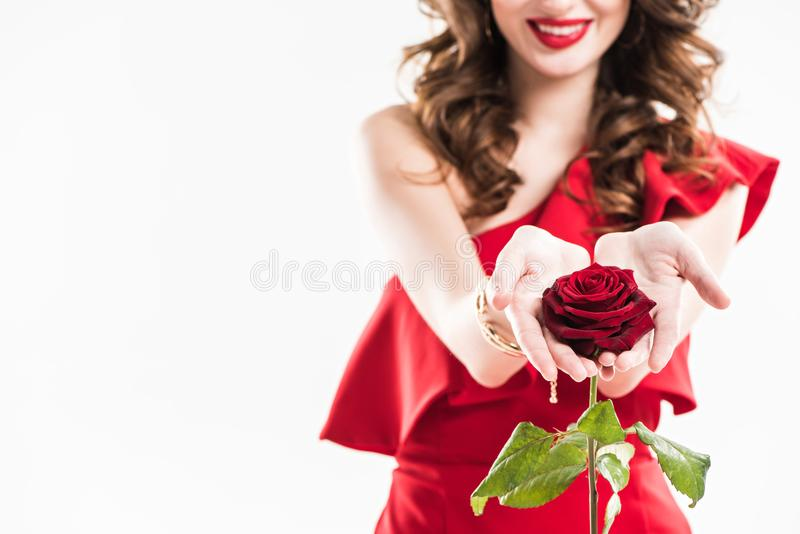 cropped image of attractive fashionable girl showing red rose in hands stock images